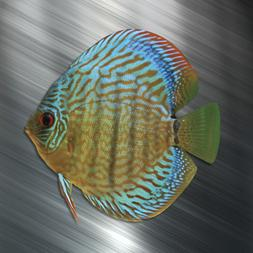 ONE Discus Vinyl Decal Sticker Car Laptop Tropical Fish Aqu