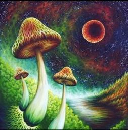 "2"" Psychedelic Mushroom Hippie Sky Colorful Art Trippy Vin"