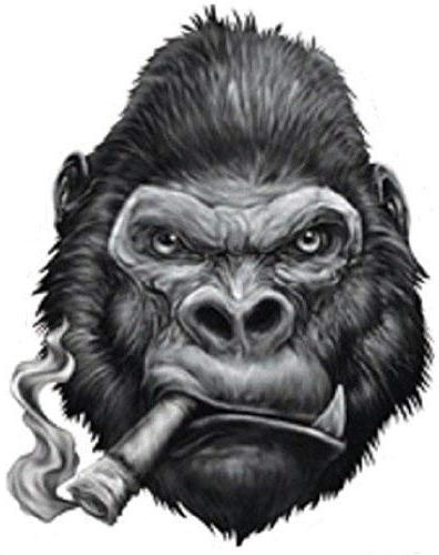 gorilla smoking cigar bumper sticker
